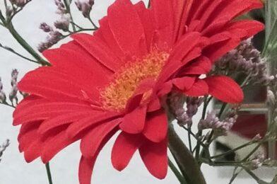 Mis flores…